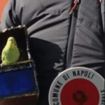 Napoli, sentenza storica per i pappagalli usati per il gioco del Lotto